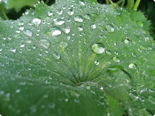 regndraaber.jpg