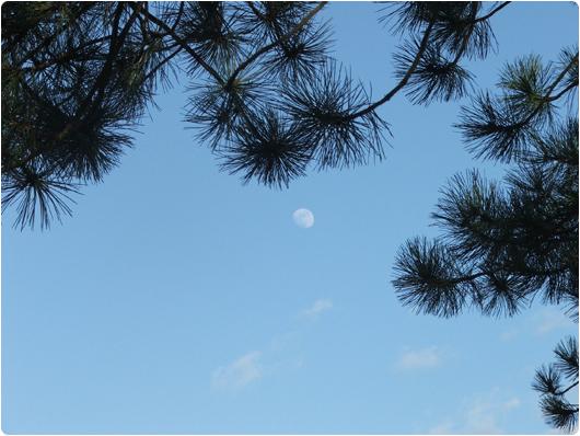 maanen1.jpg
