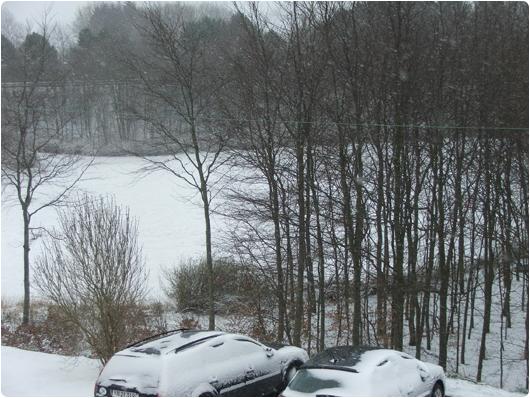 sne-1.jpg
