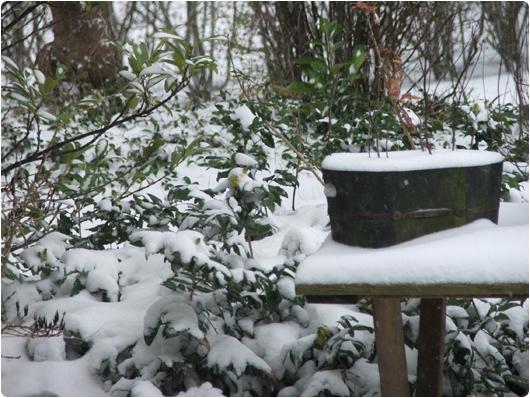 sne-2.jpg
