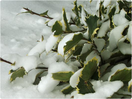 sne2.jpg