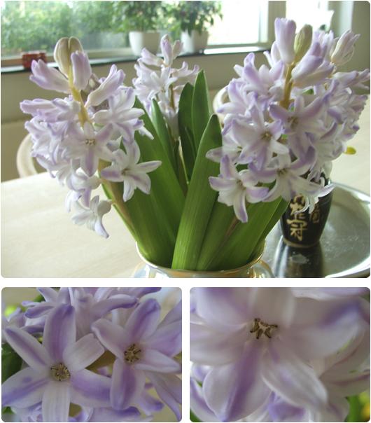 hyacinter.jpg