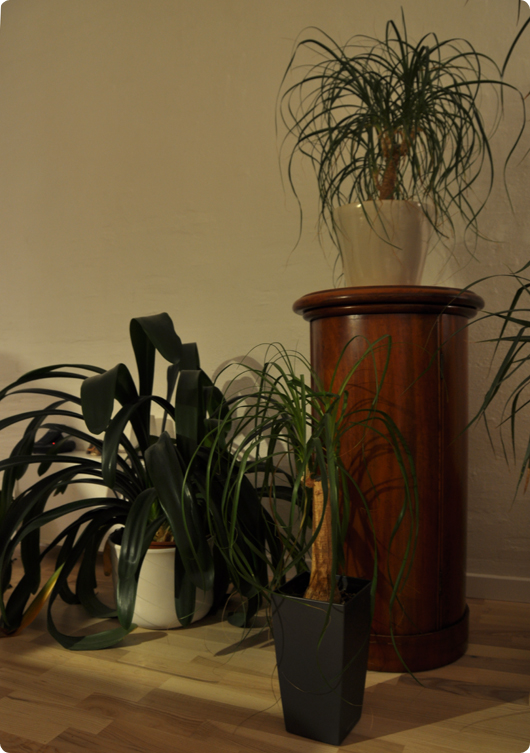 Planter |NIKON D90 | Nikon AF-S DX VR 18/200 f/3.5-5.6G IF-ED | 2 s | f/5 | ISO200| Handheld |