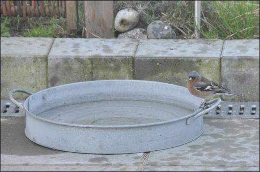 Drikketrug for en lille fugl