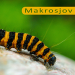 Makrosjov