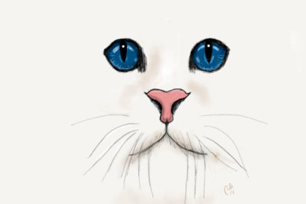 Hvid kat